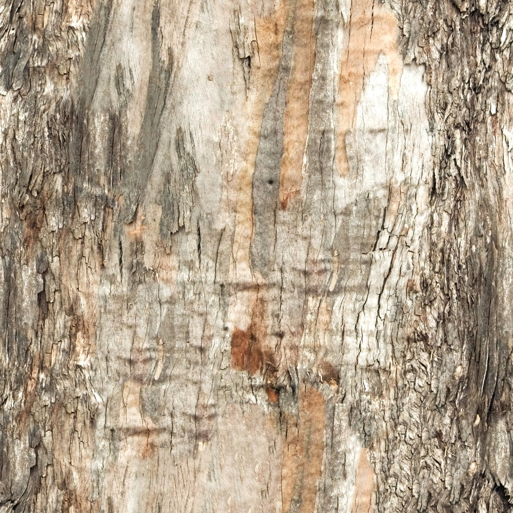 Brown Damaged Bark.jpg
