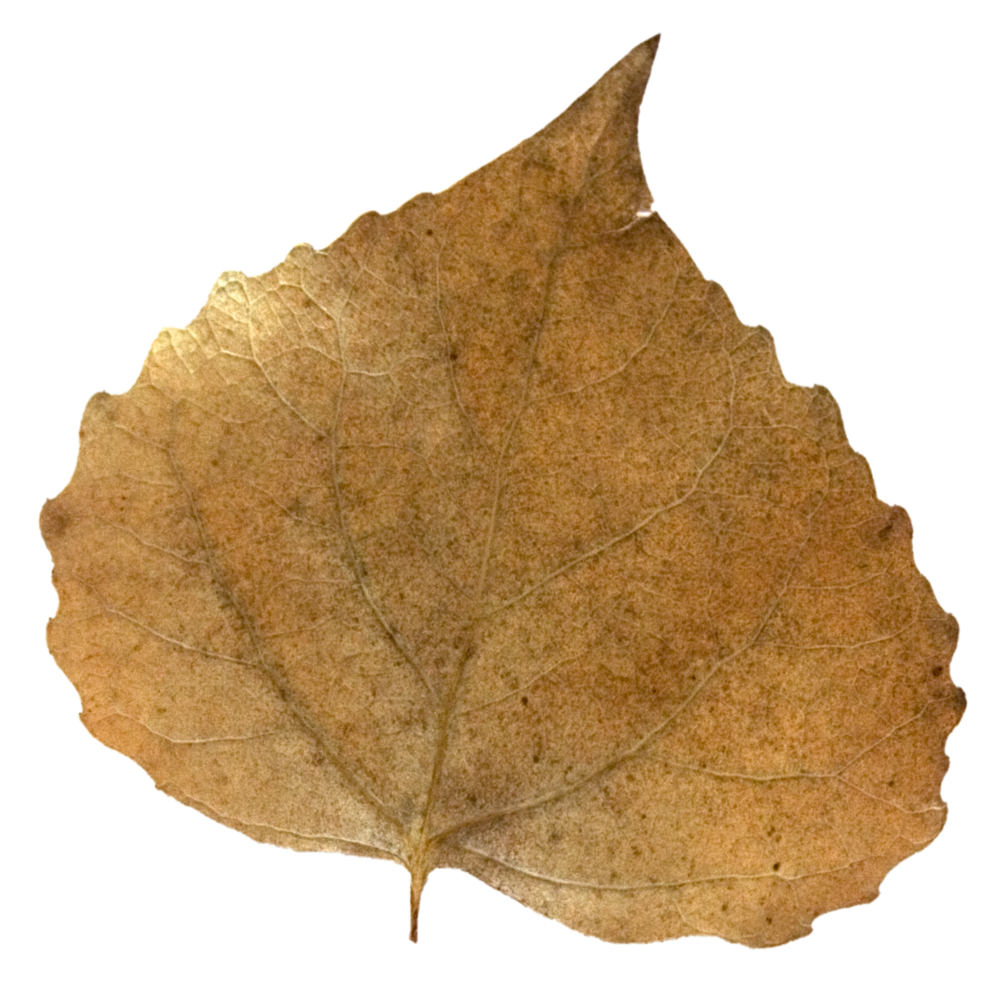 Brown Fall Leaf.png