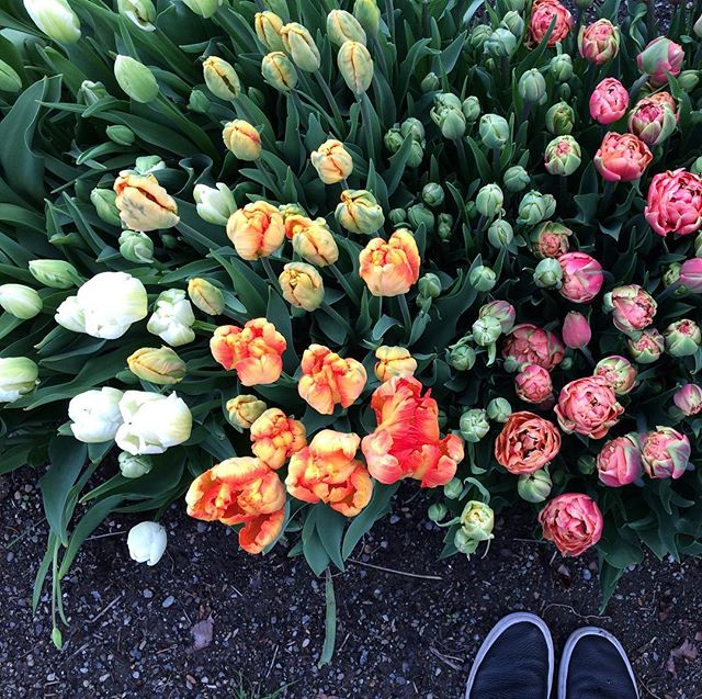 This is my patch of paradise. Let the #tulipomania begin!