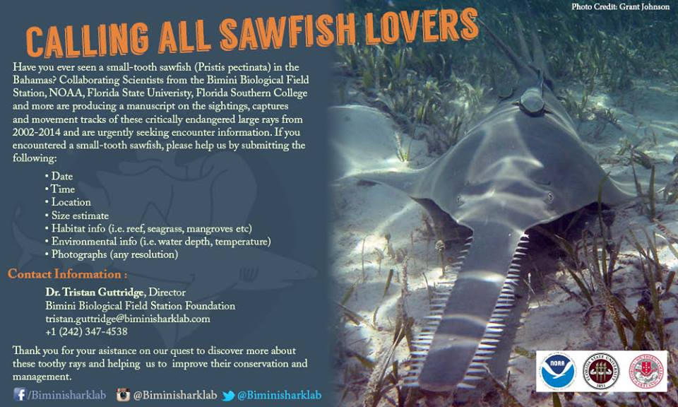 Sawfish - The smalltooth sawfish is critically endangered and this poster generated important sightings data for a publication that documented sightings and captures across the Bahamas from 2002-2015. Follow this link for the paper.