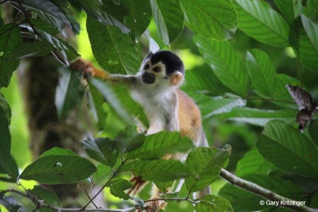 Hike to see stunning rainforest wildlife