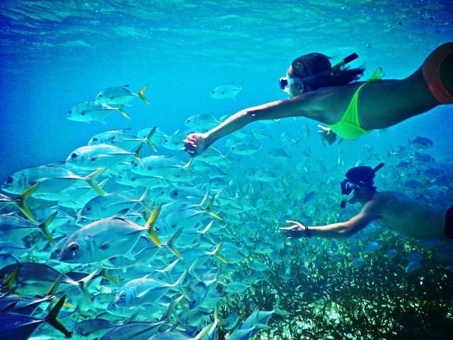 Enjoy the sea life right around the island!