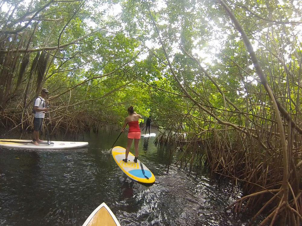 Paddle board through a mangrove