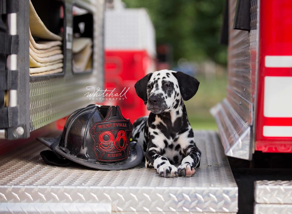Cooper being a firehouse dog!