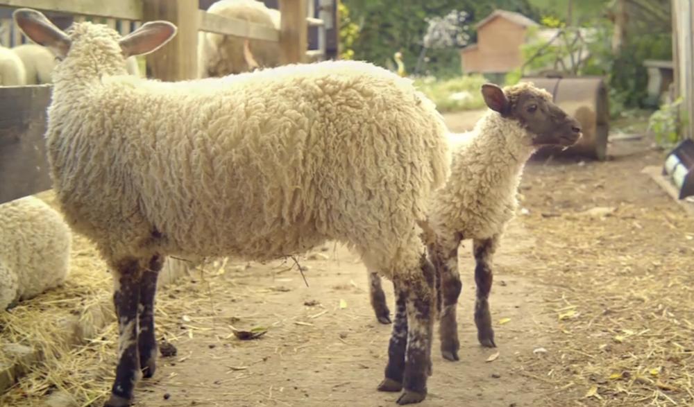 lamb2.png