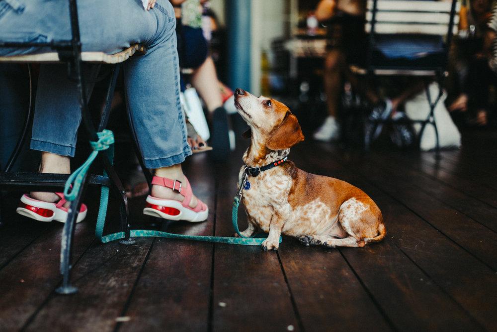 Doggie-2.jpg