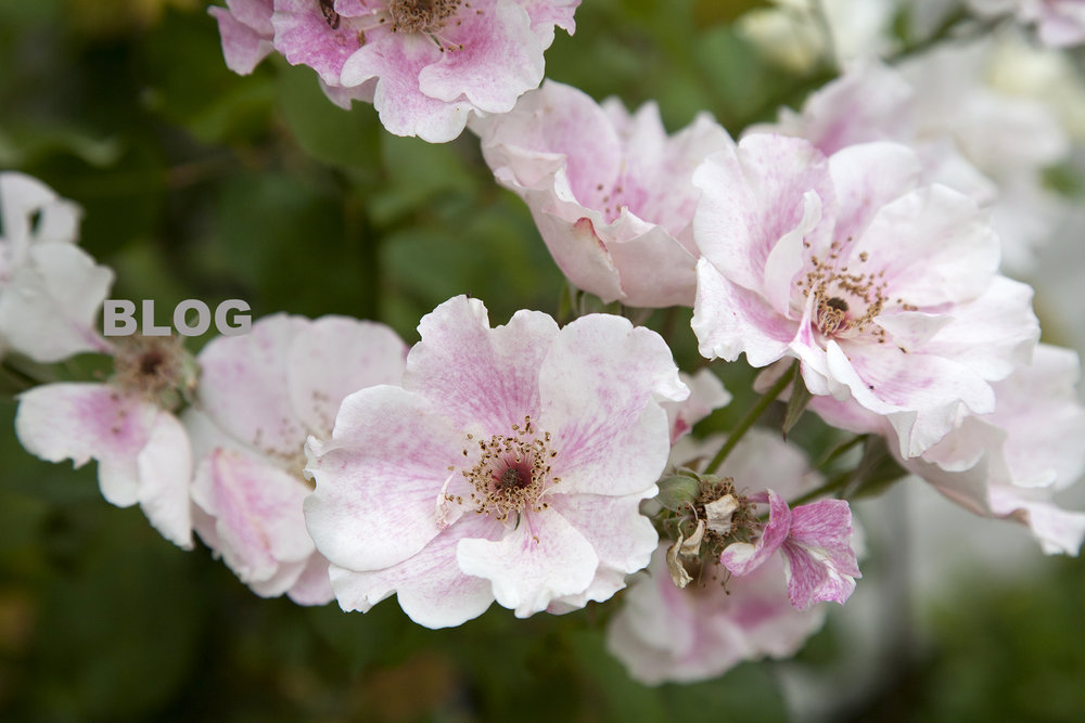 blog-Flowers .jpg