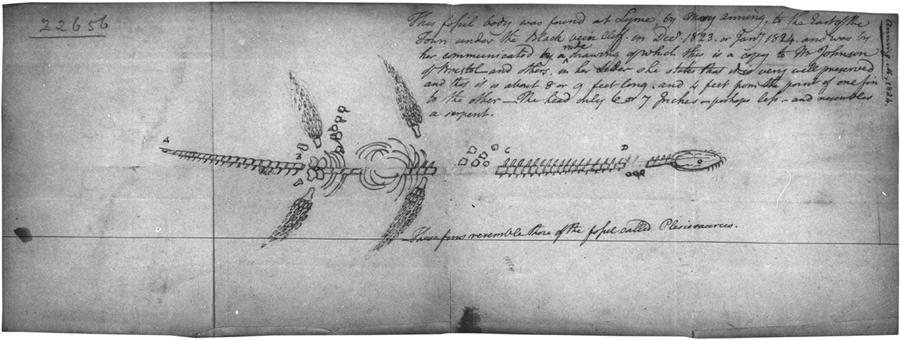 Mary Anning's  drawing of a Plesiosaur , 1824.