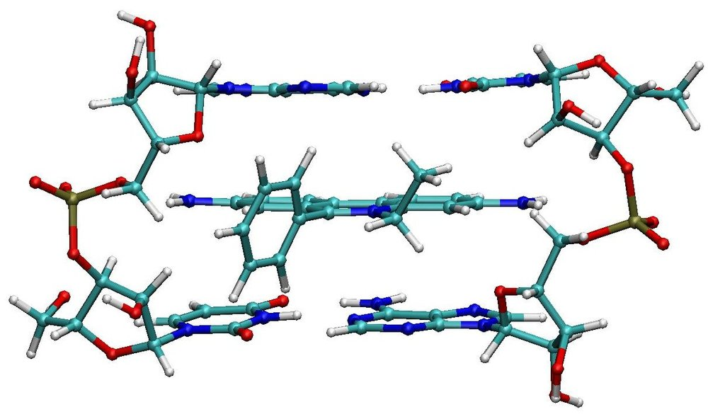 Ethidium Bromide intercalates between the base pairs of the DNA Helix.