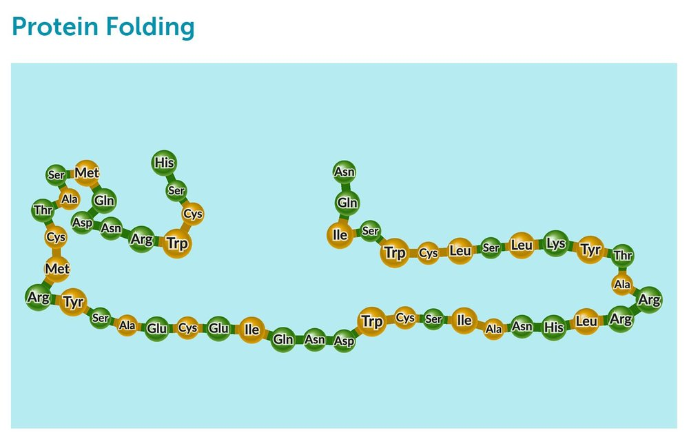 Protein Folding.JPG