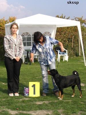 "Appenzeller BOB National Specialty Winner 2006, ""ICH Zafira"""