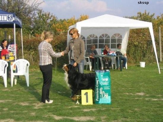 "Bernese BOB National Specialty Winner 2006, ""CH Arrakis av Milkcreek"""