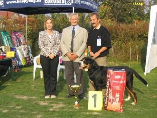 """Greater Swiss Mountain Dog National Specialty Winner 2006, BOB, Best in Show"""" ICH Aldo vor Kohlerschlucht"""""""