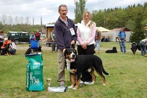 """Grosser Schweizer Sennenhund National Specialty Winner, BOB """"ICH. Aldo vor Kohlerschlucht"""""""