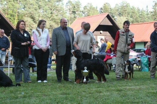 "Bernese Mountain Dog National Specialty Winner 2007, BOB, BIS "" Ambra z Peruskcych Lesu"""