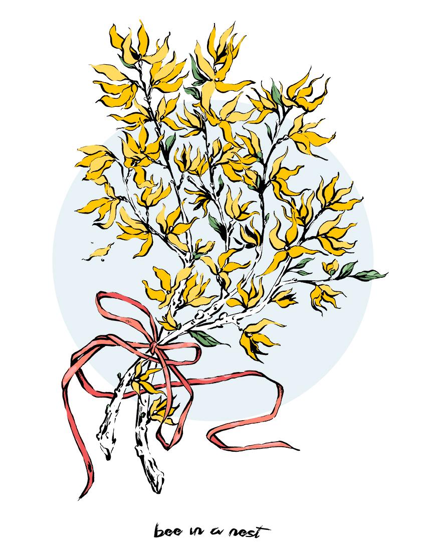 Forsizia o Forsythia, il fiore dell'anticipazione - Ho letto un poco di questa pianta e ho scoperto molte informazioni su un fiore che ho sempre considerato comune.Prima di tutto, anche se siamo abituati a vedere la fioritura della Forsizia nella maggioranza dei giardini d'Europa, questo fiore ha origini asiatiche.Ci sono 14 specie nella famiglia delle forsizie (compreso l'olivo!). Quelle più comuni che puoi trovare nel tuo giardino sono La Forsizia Europea che puoi riconoscere per i suoi 6 petali arrotondati oppure la Forsizia Japonica (che é quella qui illustrata) con solo 4 petali dalla forma appuntita.Ogni inverno questo fiore coraggioso sboccia nel freddo con il suo colore giallo che ci fa ricordare che da li a pochi mesi la primavera ci avvolgerà dandoci speranza. Nel linguaggio dei Fiori la Forsizia significa anticipazione.