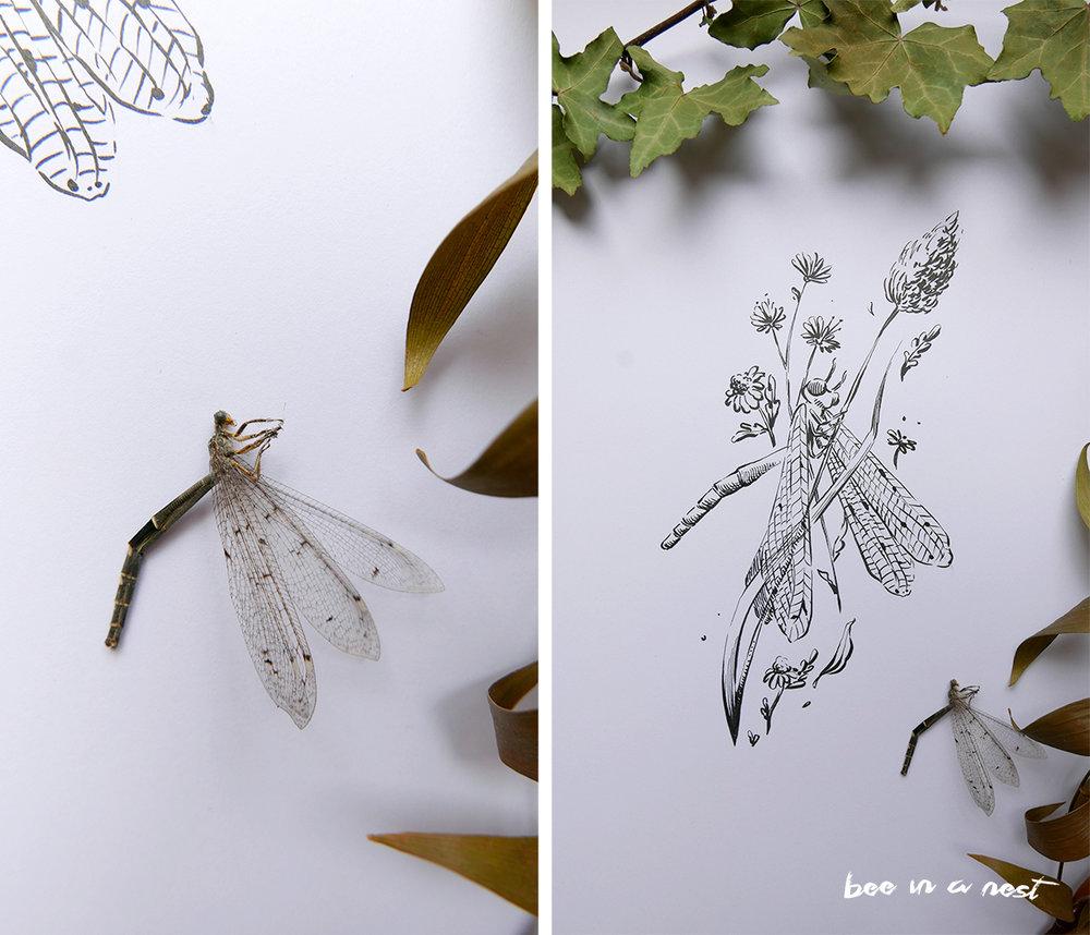 dragonfly_michela-tannoia_3.jpg