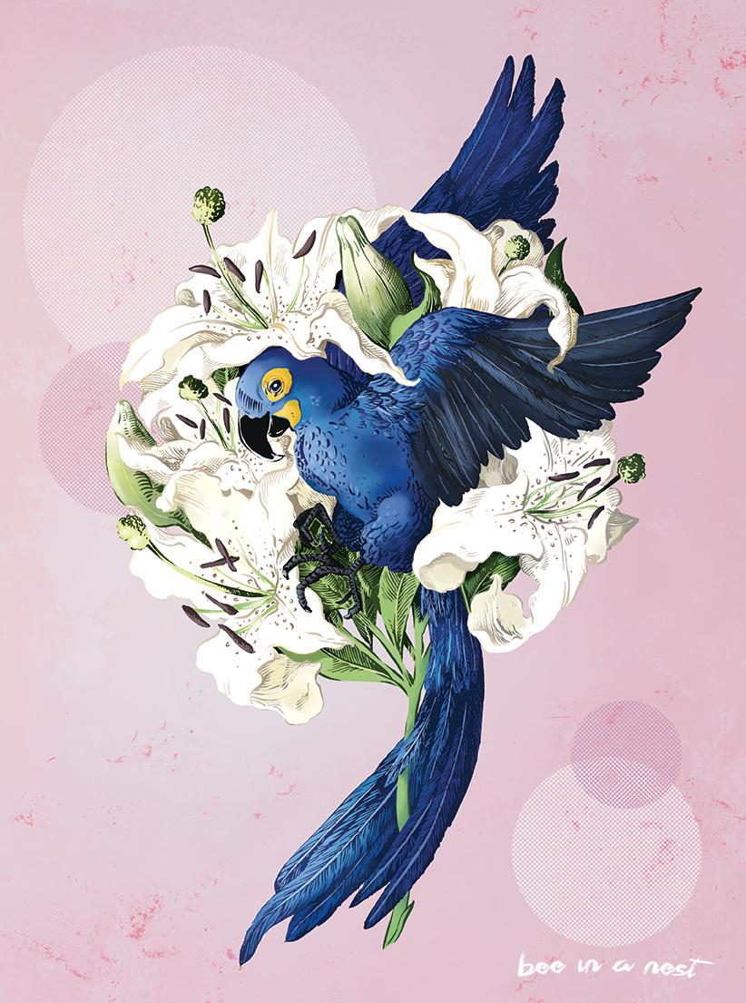 Hyacinthine Maccaw e gigli bianchi. - Se decidi di spiccare il volo c'è una bella possibilità di fiorire alla grande!