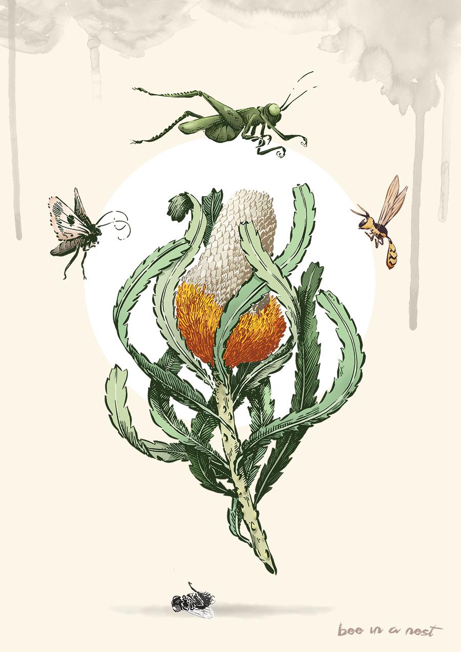 - Dopo la Protea dall'Africa qui la Banksia un fiore originale dell'Australia, ricco di nettare, è essenziale per una ricca fauna come insetti, uccelli e topi ♥ ️