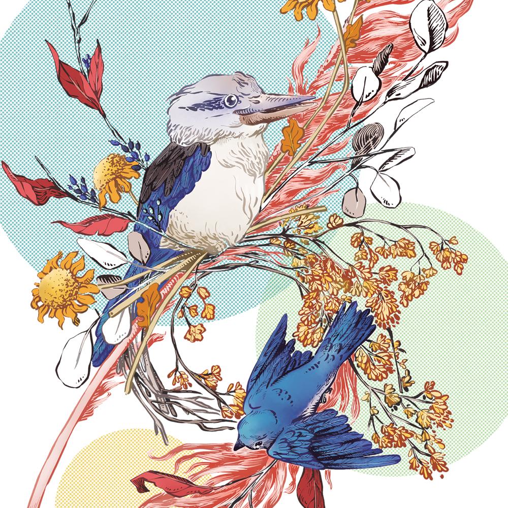 kookabura-dettaglio.jpg