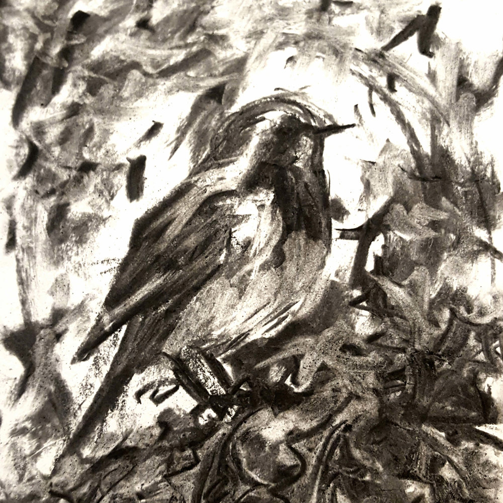 Robin by Leo Crane.jpg