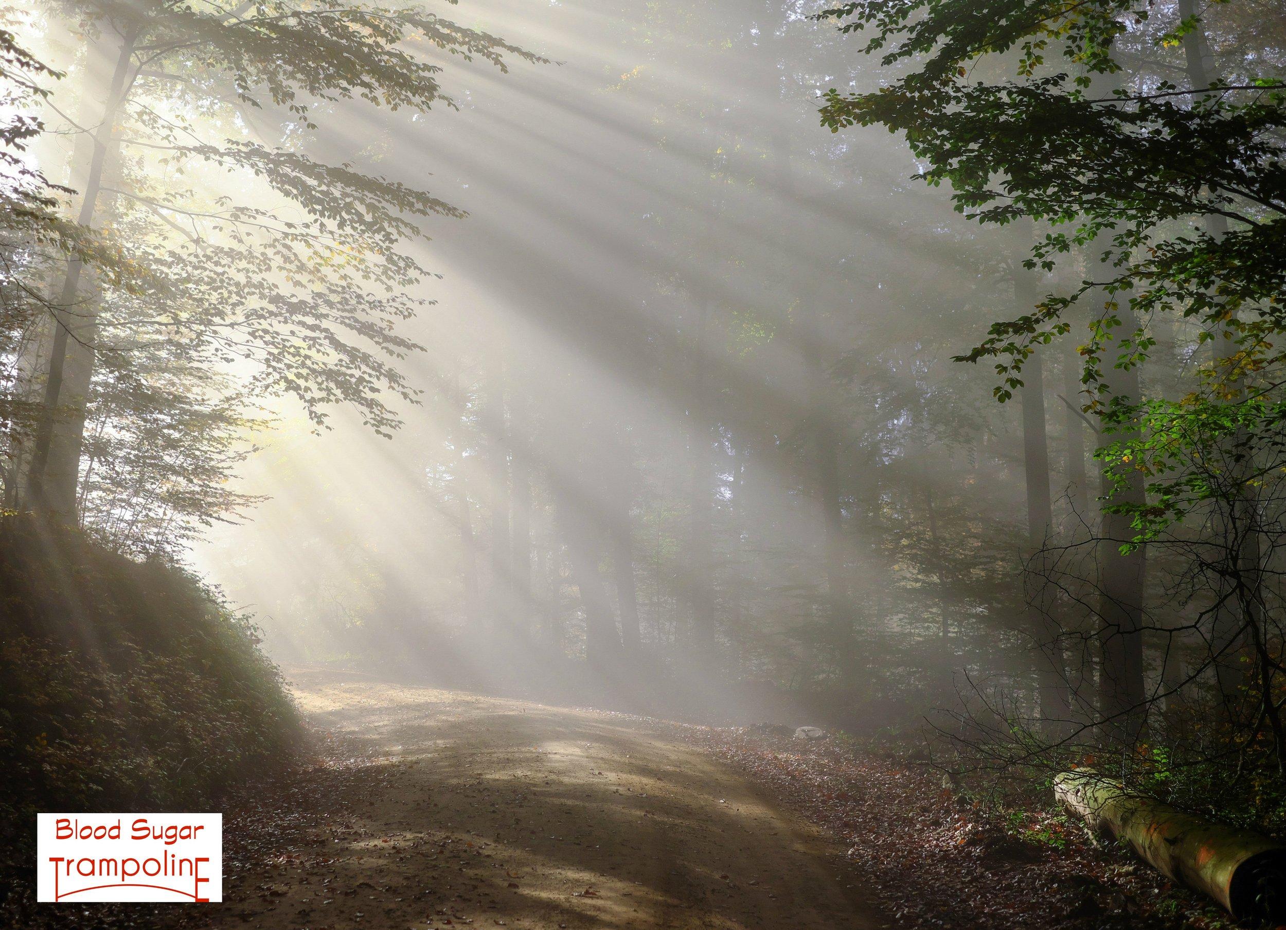 Fog beams of light