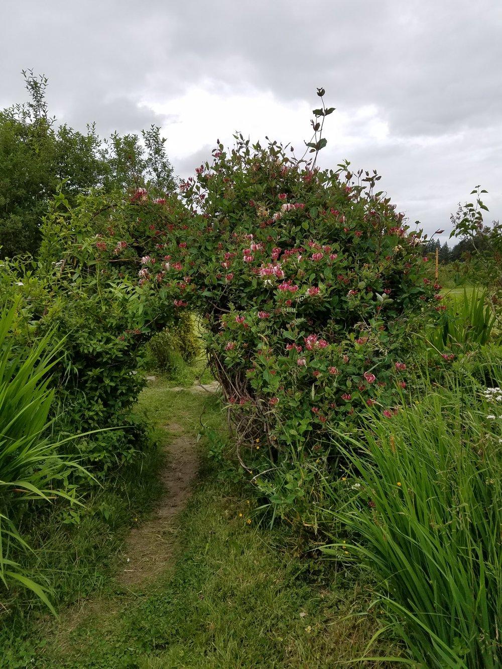 Secret garden entrance.jpg