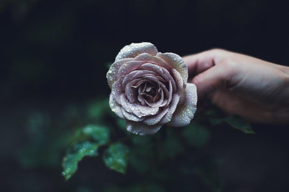 rain-drops-on-roses_4460x4460.jpg