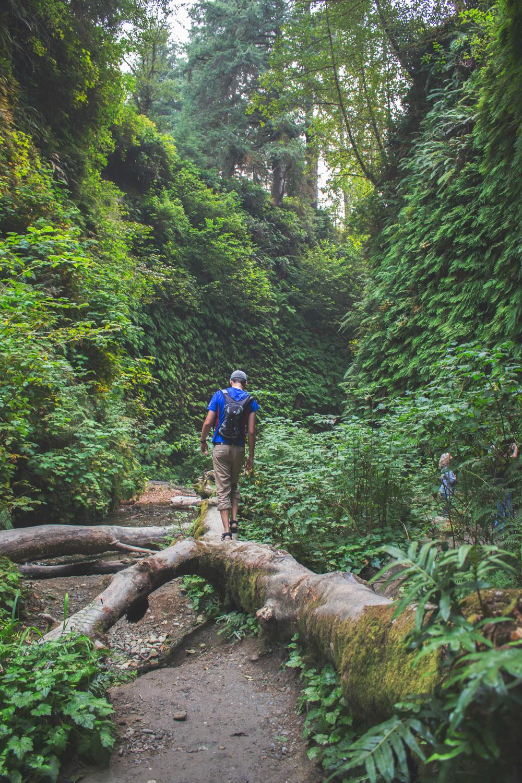 2-Redwoods-2017_021.jpg
