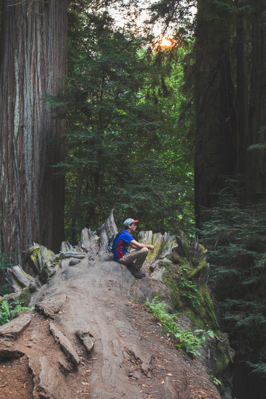 2-Redwoods-2017_091.jpg