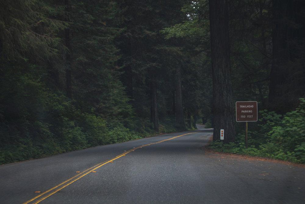 2-Redwoods-2017_103.jpg