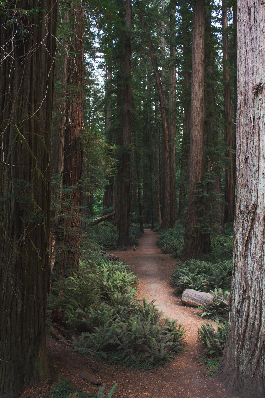 2-Redwoods-2017_092.jpg