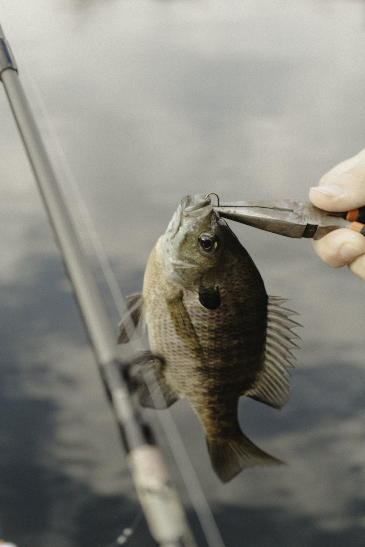 Fishing-7.jpg