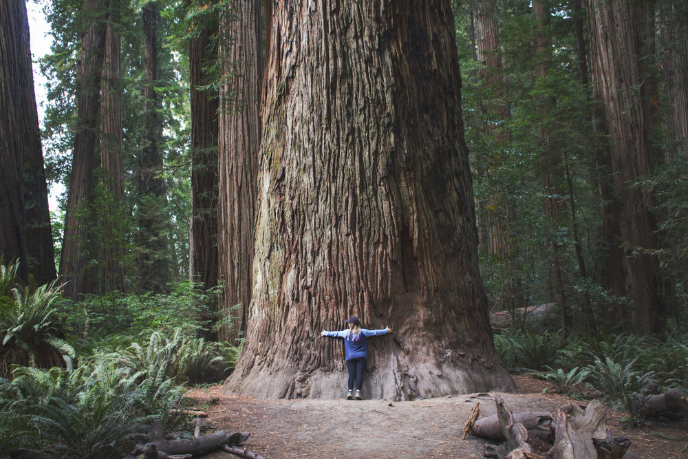 the redwoods - --Adventures--