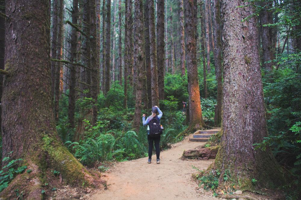 2-Redwoods-2017_030.jpg