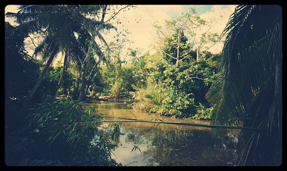 Gęste zarośla delty Mekongu