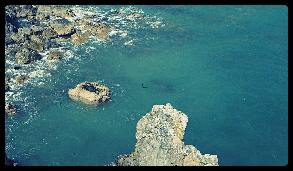 A bird building its nest on the cliffs