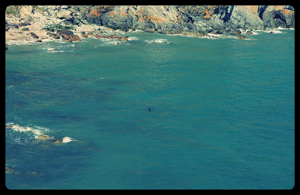 Foka pływająca w oceanie