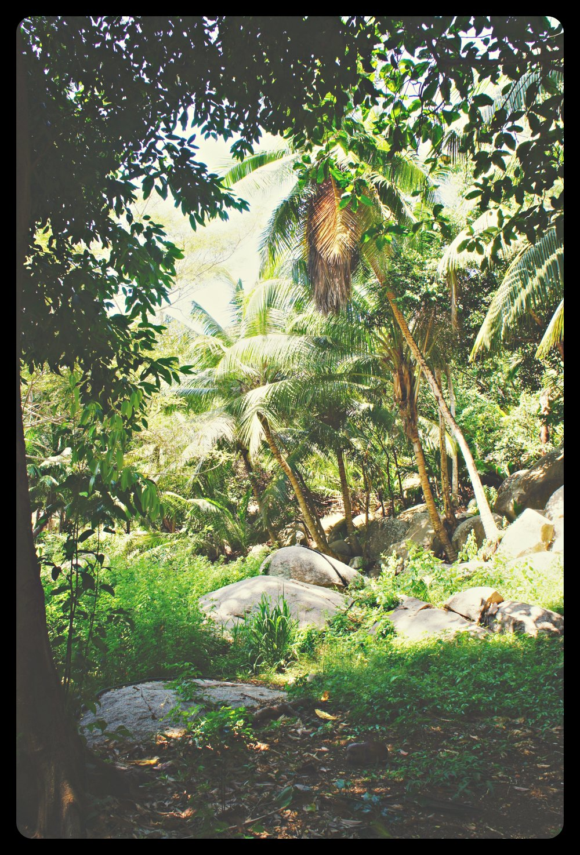 jungle_altertonative.JPG