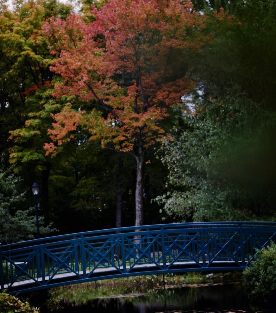 Bois de coulonge, Québec city, Québec