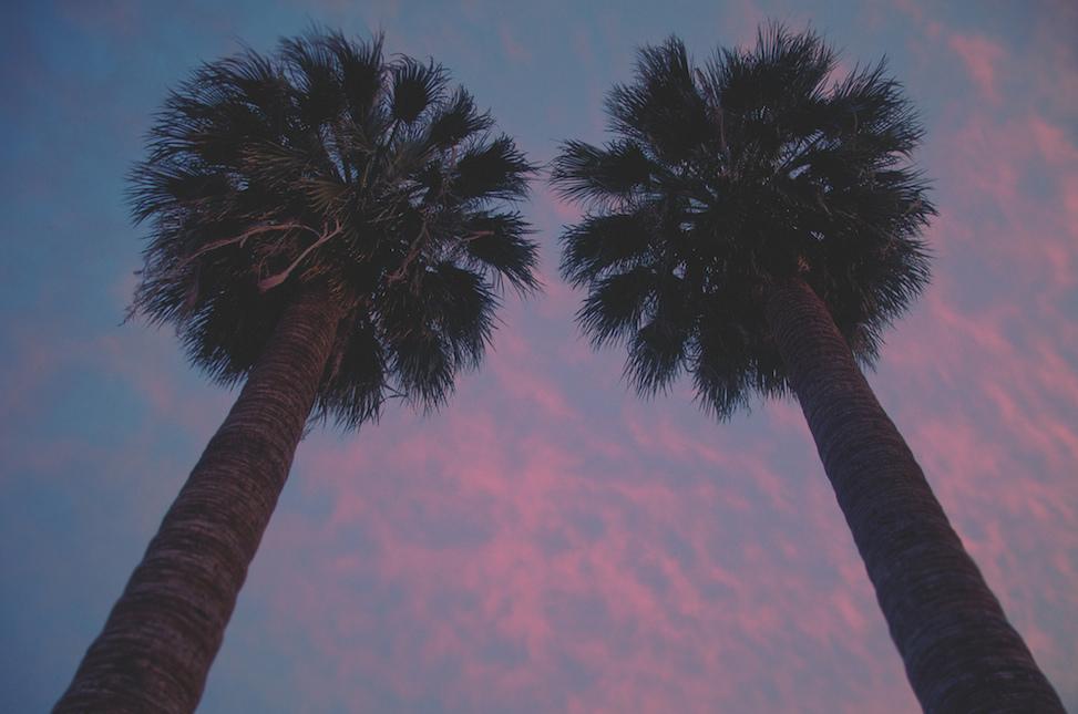 Palm trees, hoelzen house, phoenix, arizona