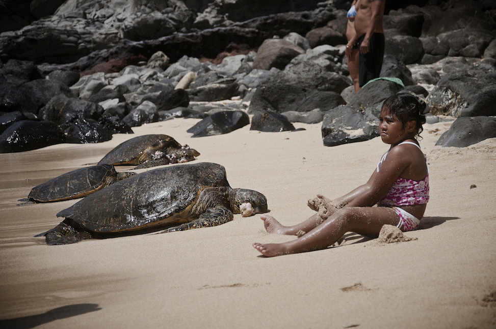Turtles and child, Ho'okipa Beach Park, paia, hawaii