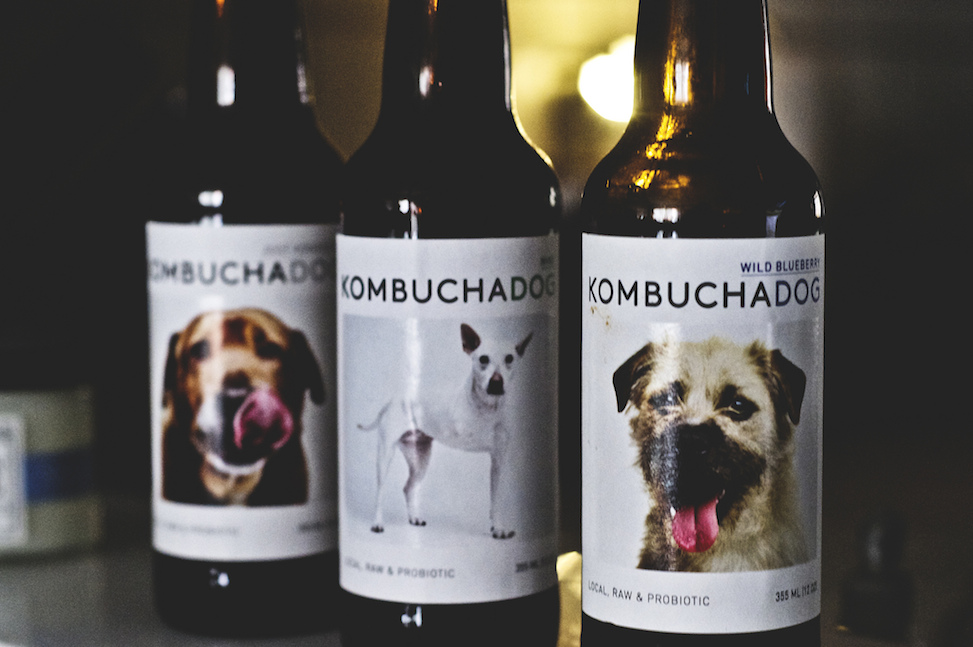 Kombucha Dog, Los Angeles, California