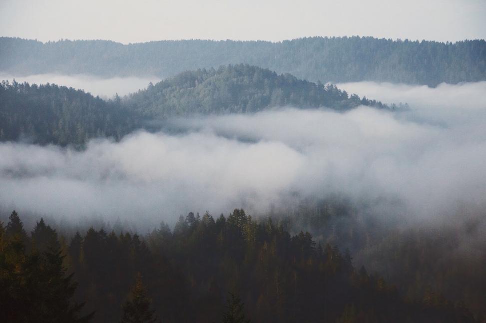 Bolinas Ridge, Lagunitas, California