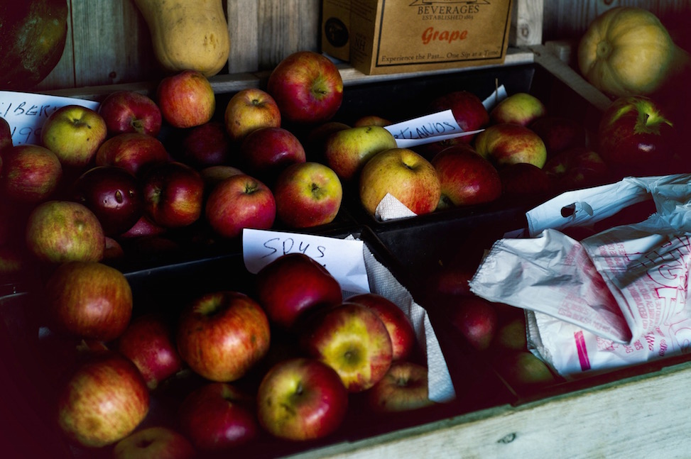 Apples, Portsmouth, New Hampshire