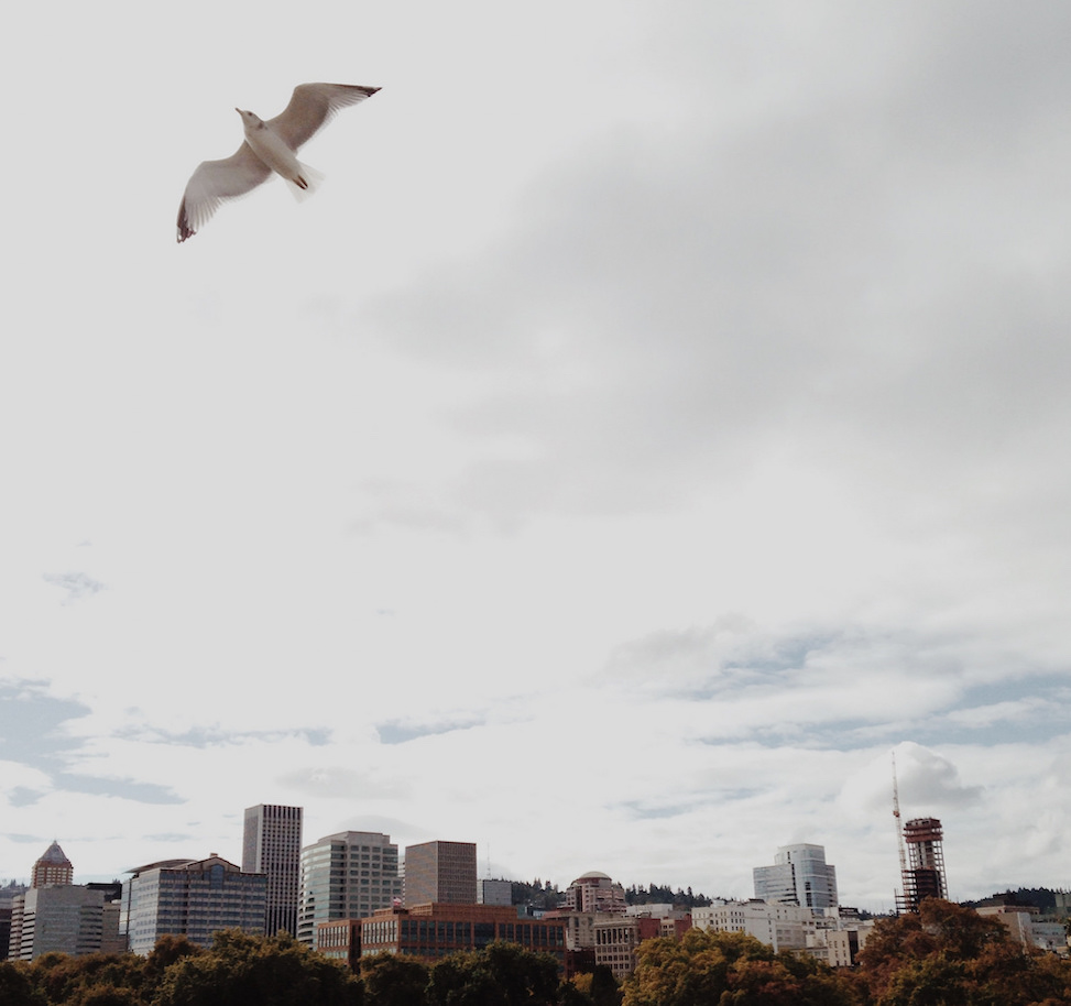 Gull over burnside bridge, portland, oregon