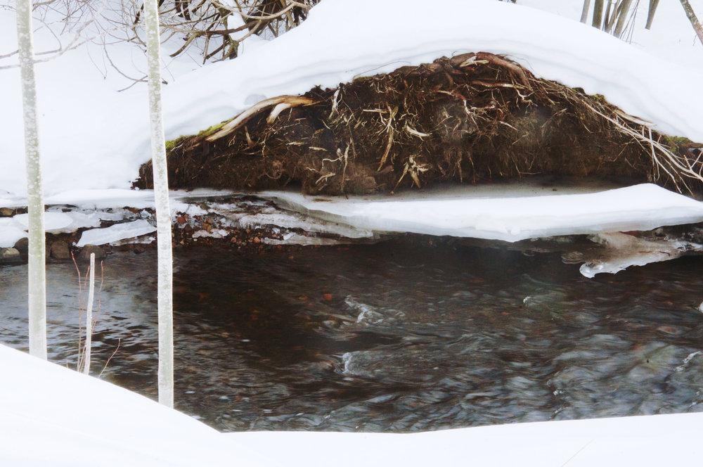 Stream near Fisherman's Road
