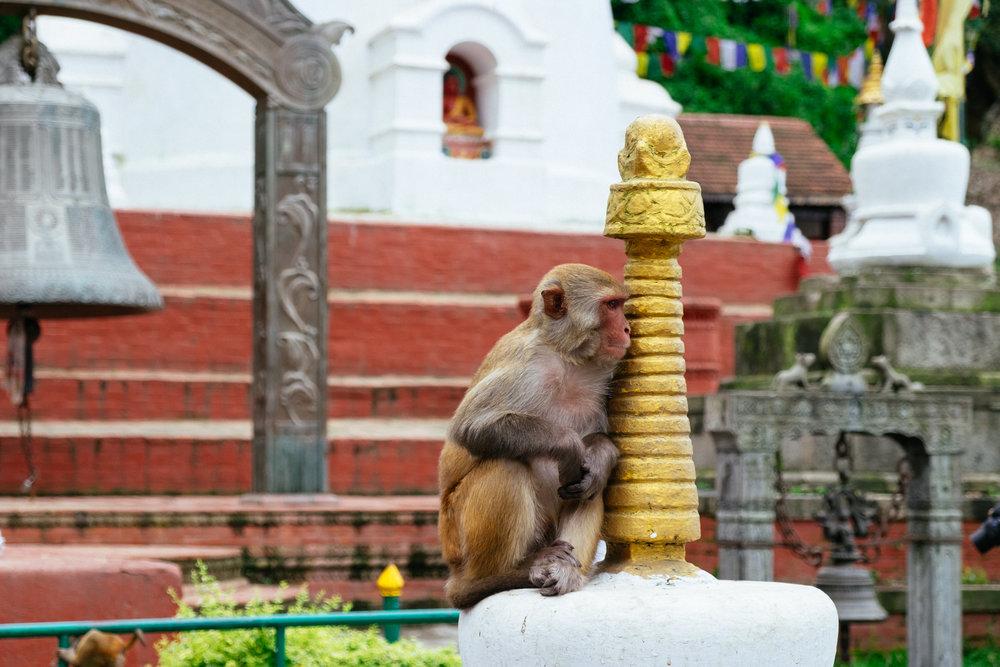 nepal-00009.jpg