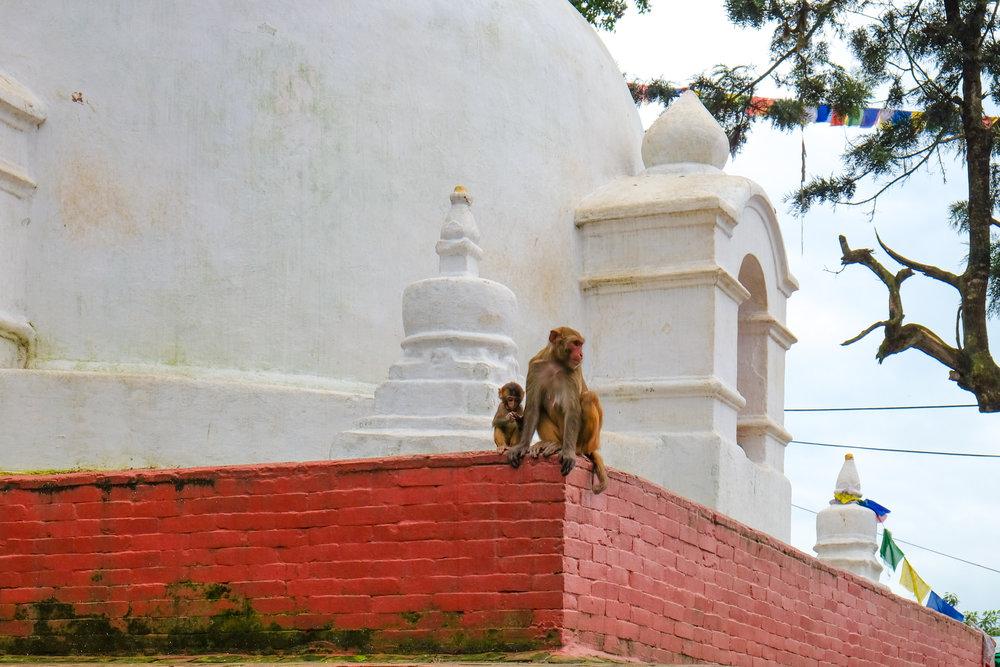 nepal-00010.jpg