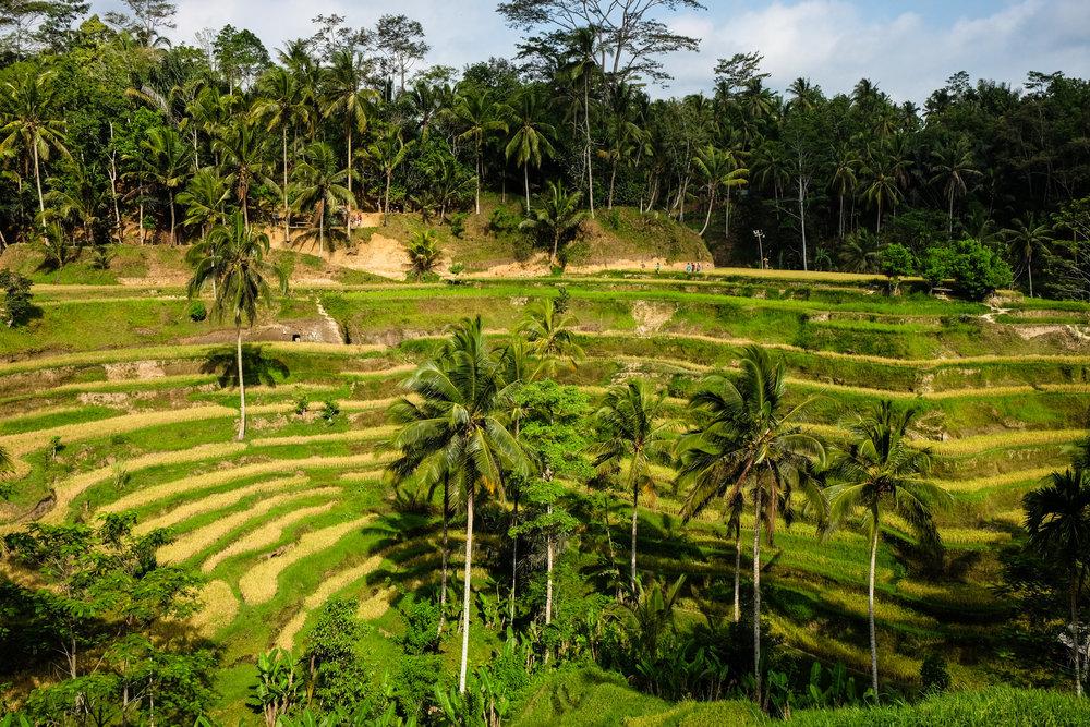 bali-indonesia-00012.jpg